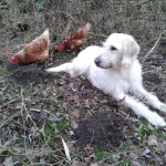 BlogBeitrag_Entscheidungen_Hund+Hühner
