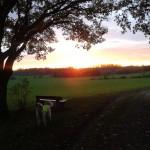 Wolfsberg11.11.14_3